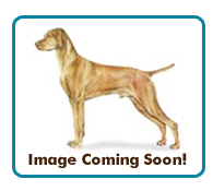Northern California Vizsla Rescue - Available Adoptions